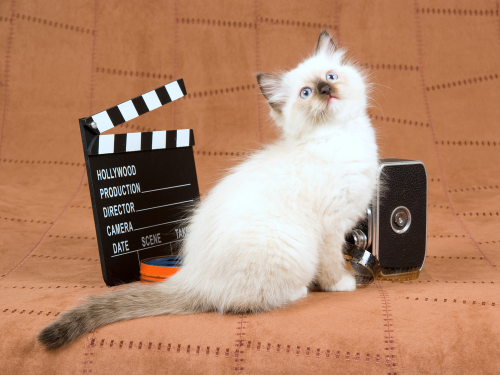 Siamese-kitten-posing-with-film-camera-and-movie-clipboard
