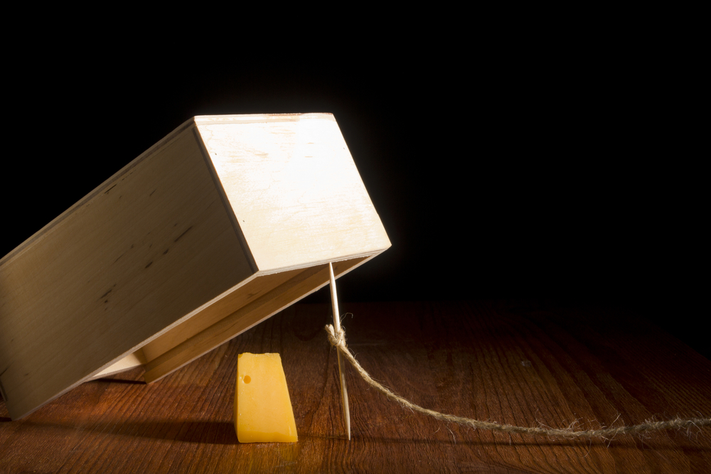 wooden-box-trap-with-cheese