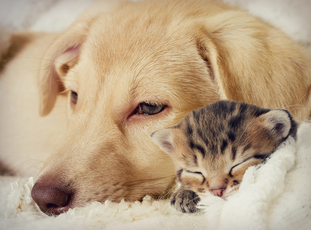 Dog-and-kitten-sleeping-together