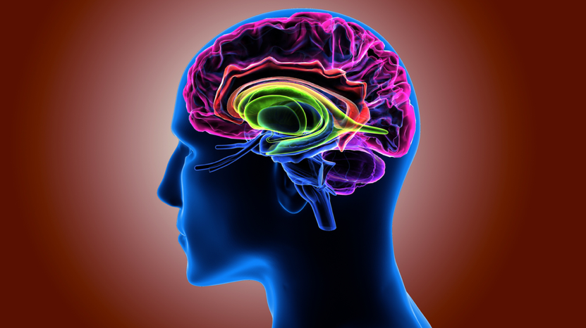 Rendering-of-human-head-and-colorful-brain