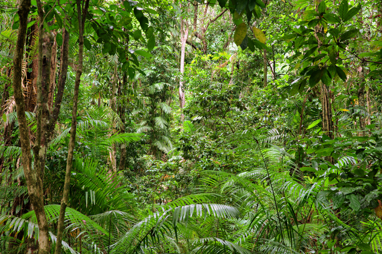 Lush-green-rainforest-in-Queensland-Australia